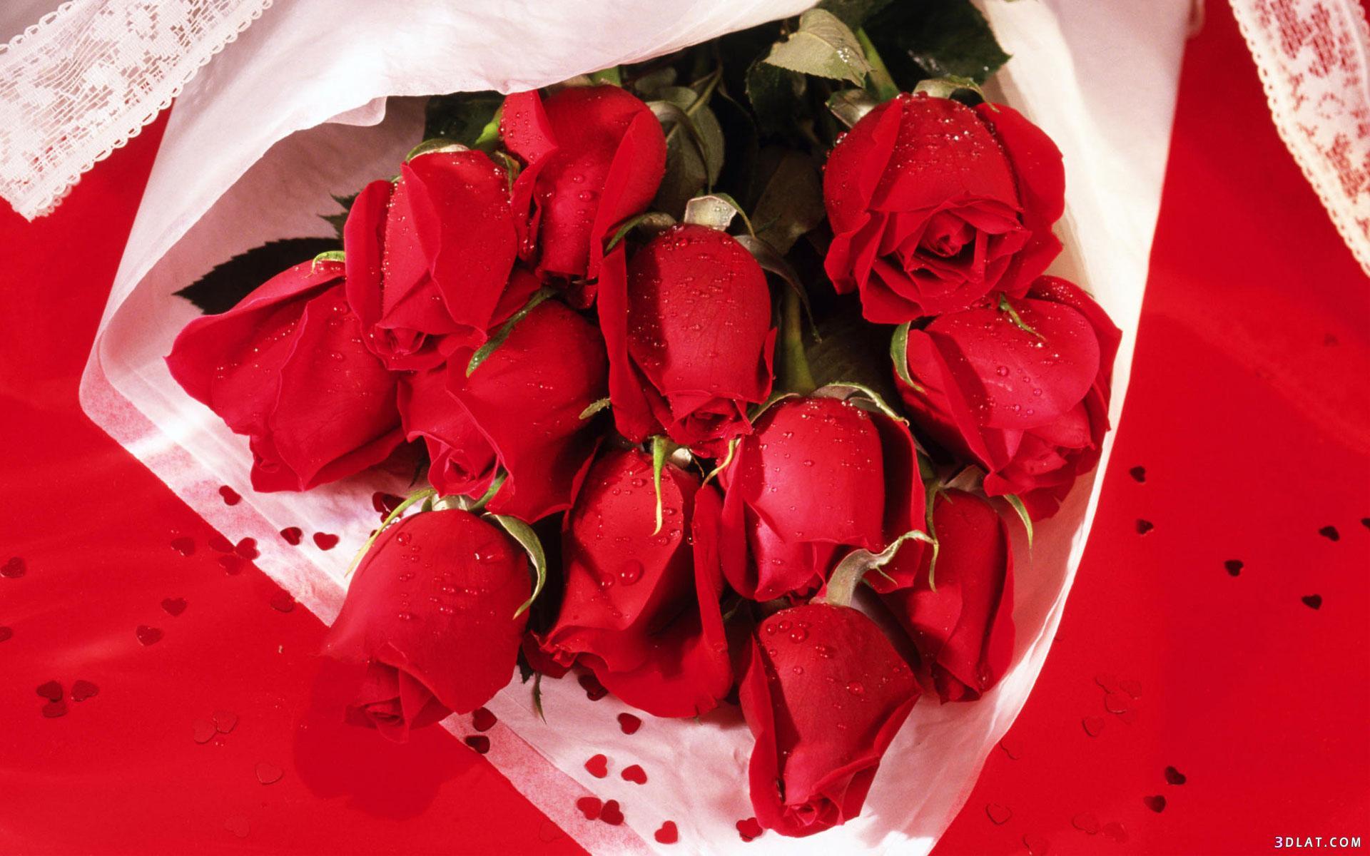 اكبر مجموعة الورد الرائعة لسطح المكتب 13661435351.jpg