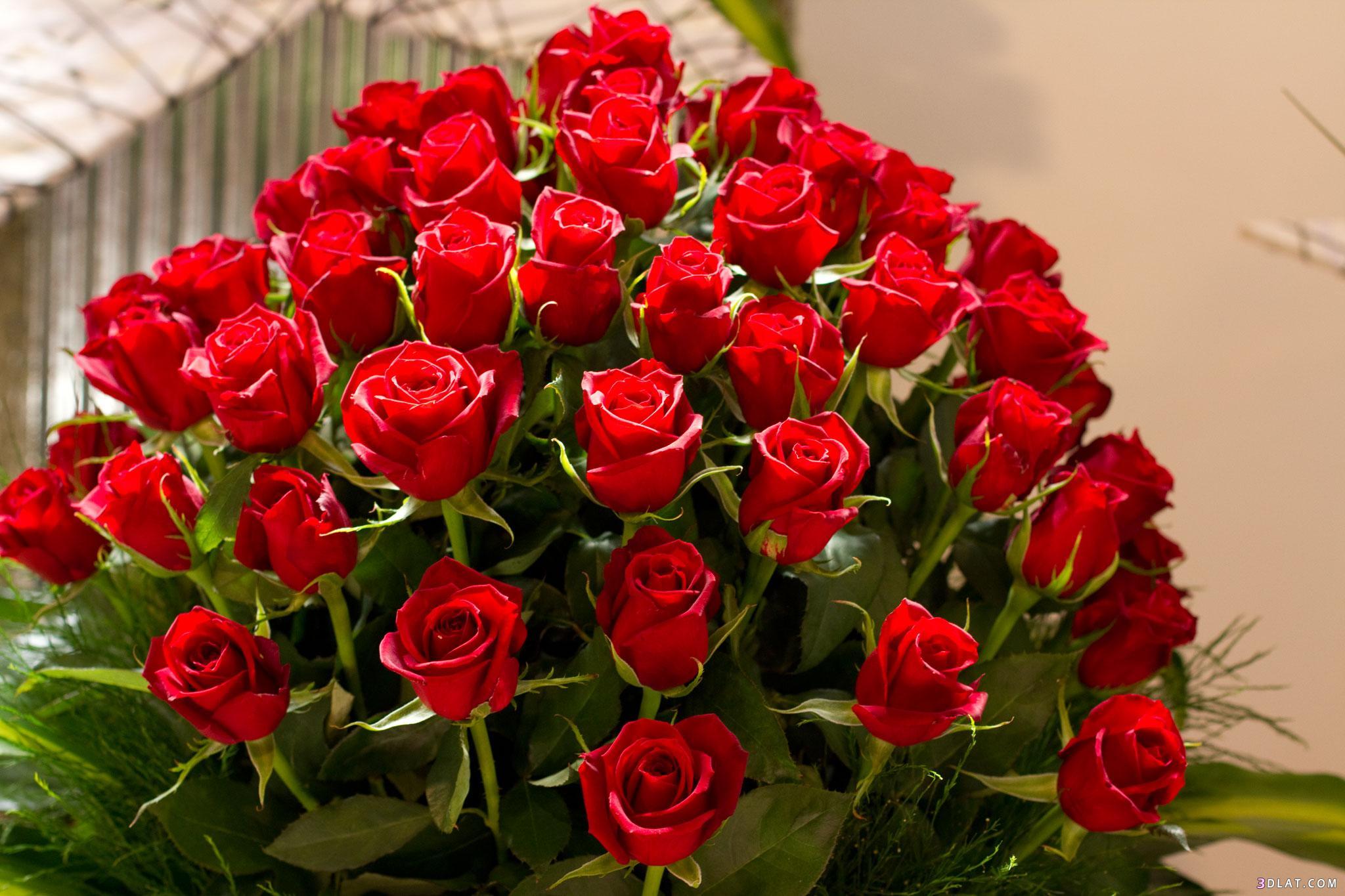 اكبر مجموعة الورد الرائعة لسطح المكتب 13661436401.jpg