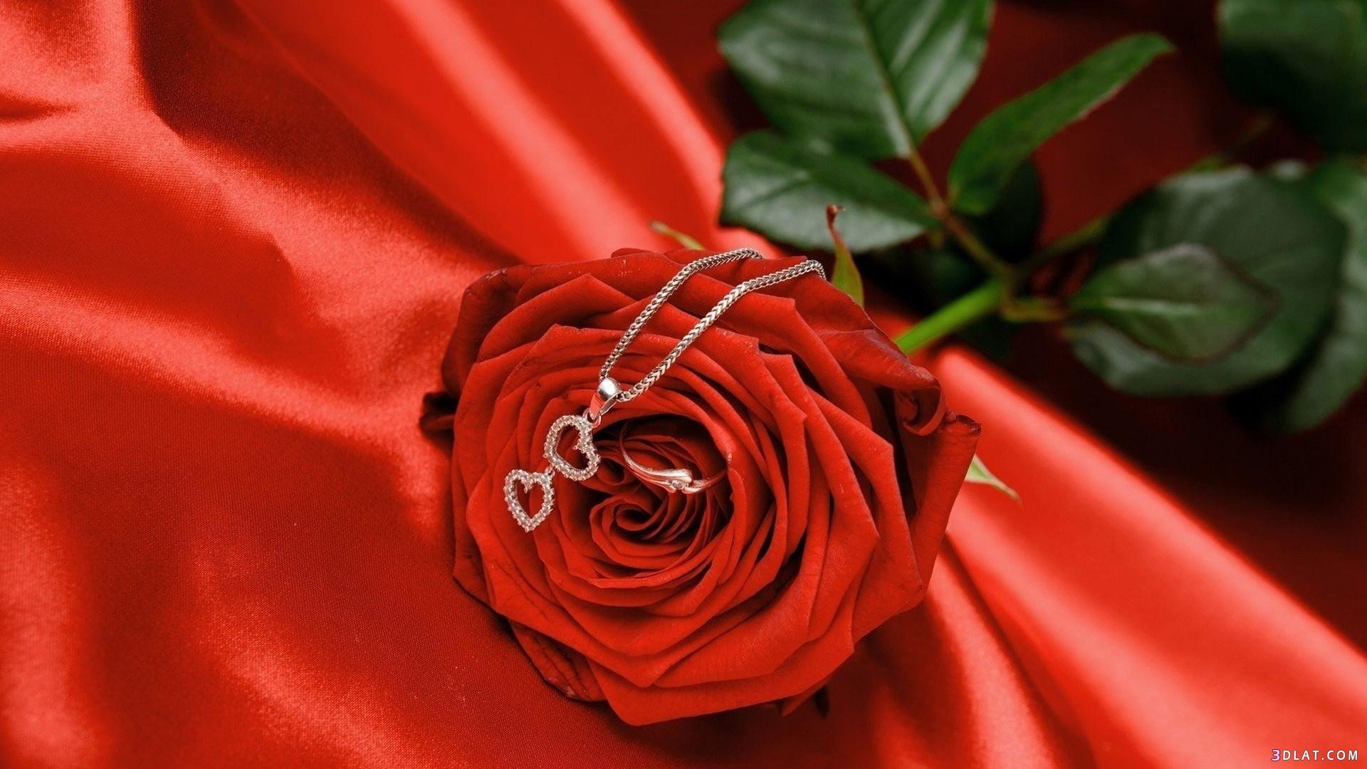 اكبر مجموعة الورد الرائعة لسطح المكتب 13661456791.jpg