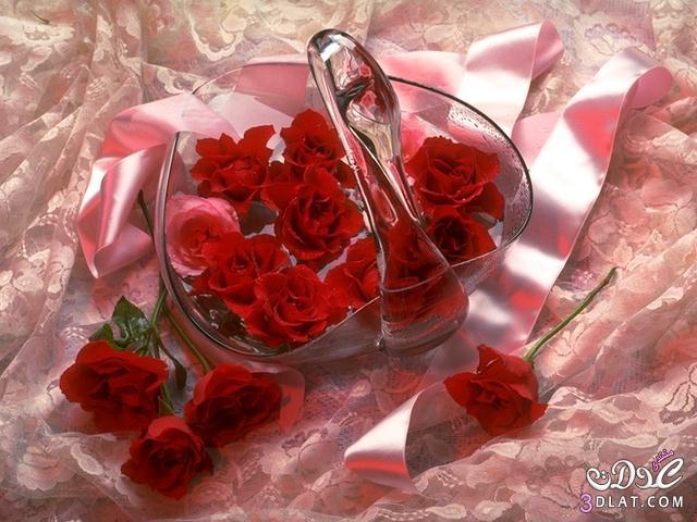 أجمل ورود الطبيعه,صور ورود وزهور روعه,صور 13677869073.jpg