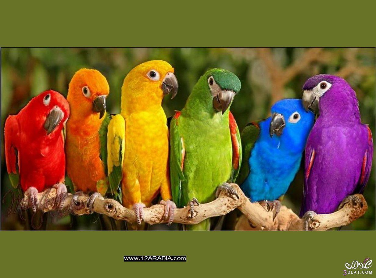 أجمل صور الطيور الملونة , صور طيور