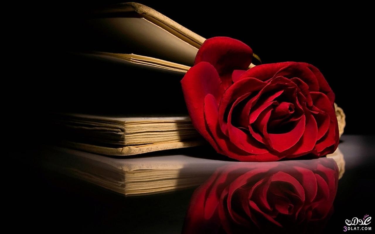 صور لسطح المكتب خلفيات ورد احمر للكمبيوتر اجمل الورود لحاسوبك روزة