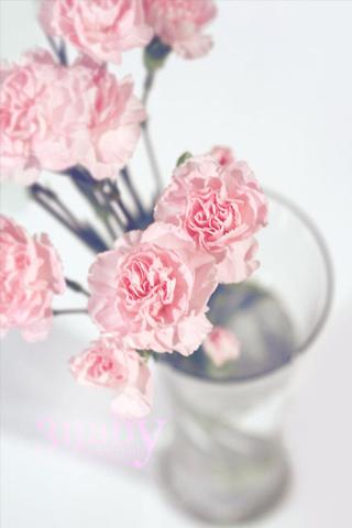 اجمل خلفيات ايباد 2021 رمزيات ايباد زهور 2021 احلى الورود الجميلة