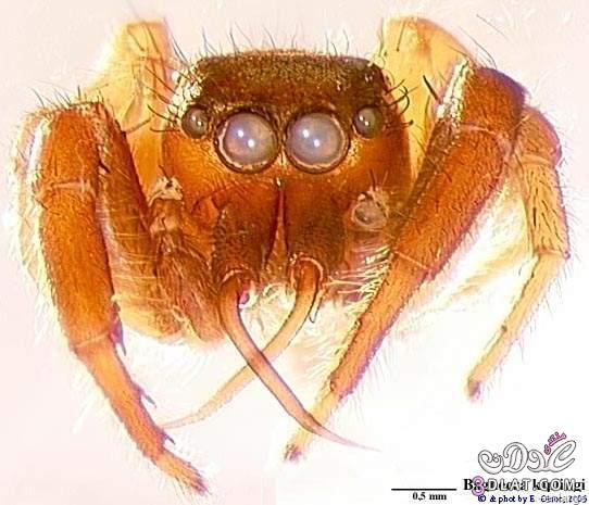 العنكبوت النبآتي العنكبوت النبآتي يوجد عنكبوت 13767532882.jpg