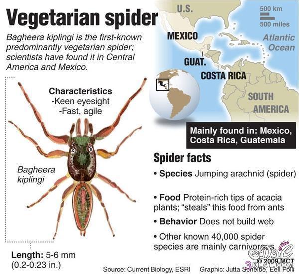 العنكبوت النبآتي العنكبوت النبآتي يوجد عنكبوت 13767532883.jpg