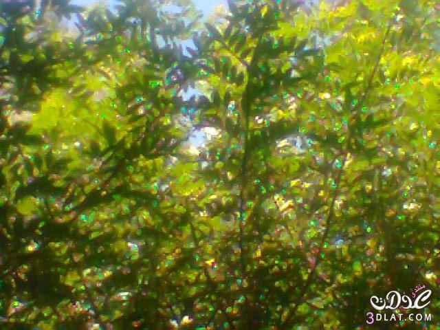 صور طبيعية,تصويرى, لقطات من الطبيعة 13774589432