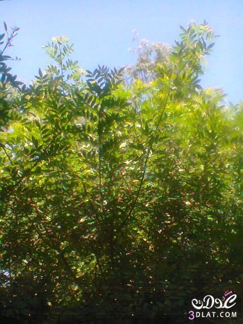 صور طبيعية,تصويرى, لقطات من الطبيعة 13774589433