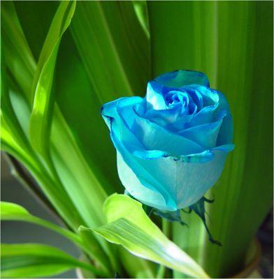 اجمل الورود الطبيعيه ورود طبيعيه ورود 13788497423.png
