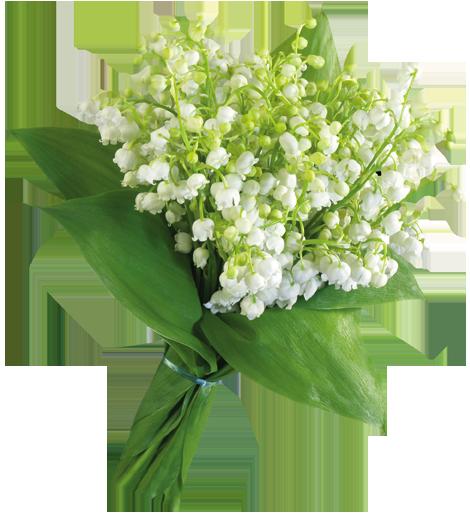 اجمل الورود الطبيعيه ورود طبيعيه ورود 13788497424.png