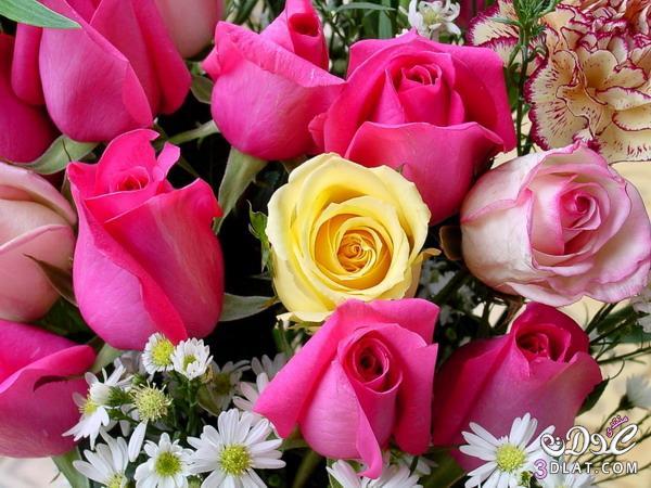 اجمل الورود الطبيعيه ورود طبيعيه ورود 13788497427.jpg
