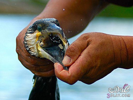 اغرب طرق صيد سمك. طرق قديمه جدا لصيد السمك