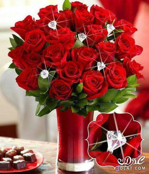 كون كلمة وردة واهديها للعضو ال بتحبه - صفحة 14 13807976872