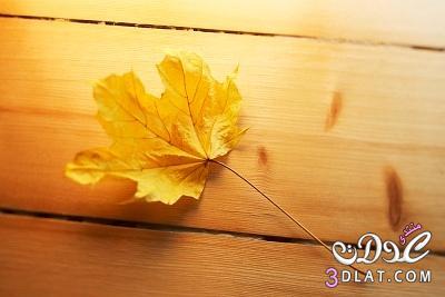 اصنعى منظف الارضيات الخشبية بنفسك 13861868301.jpg
