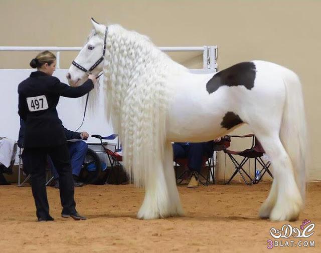 أجمل الخيول فى العالم 13862950842.jpg