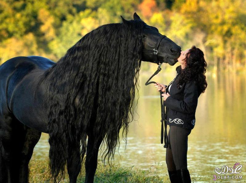أجمل الخيول فى العالم 13862950844.jpg