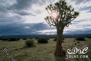 صور نباتات , صور من الطبيعه , صور اشجار, صور رائعه من الطبيعه 13865602542.jpg