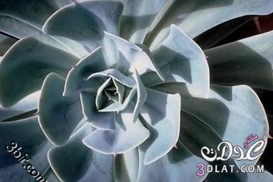 صور نباتات , صور من الطبيعه , صور اشجار, صور رائعه من الطبيعه 13865602544.jpg