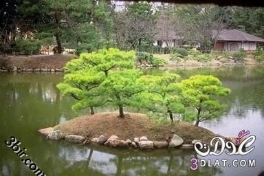 صور نباتات , صور من الطبيعه , صور اشجار, صور رائعه من الطبيعه 13865602545.jpg