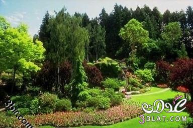 صور نباتات , صور من الطبيعه , صور اشجار, صور رائعه من الطبيعه 13865602546.jpg