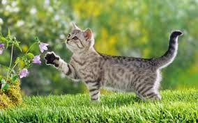 صور قطط , صور قطط جديده , صور قطط مرحه , صور قطط مضحكه 13866192891.jpg