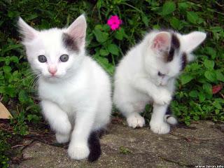 صور قطط , صور قطط جديده , صور قطط مرحه , صور قطط مضحكه 138661928910.jpg