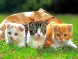 صور قطط , صور قطط جديده , صور قطط مرحه , صور قطط مضحكه 13866192892.jpg