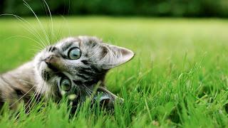 صور قطط , صور قطط جديده , صور قطط مرحه , صور قطط مضحكه 13866192893.jpg