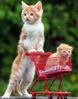 صور قطط , صور قطط جديده , صور قطط مرحه , صور قطط مضحكه 13866192894.jpg