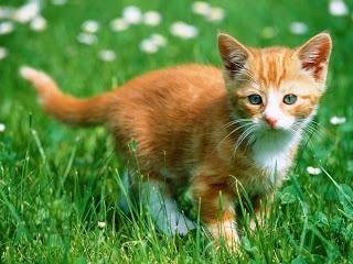 صور قطط , صور قطط جديده , صور قطط مرحه , صور قطط مضحكه 13866192895.jpg