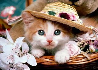 صور قطط , صور قطط جديده , صور قطط مرحه , صور قطط مضحكه 13866192899.jpg