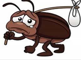 كيف اتخلص من النمل فى منزلى ؟ 13867186142.jpg
