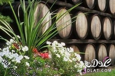 صور نباتات صور نباتات من كل مكان صور من الطبيعه صور طبيعيه 13867868761.jpg