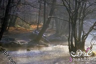 صور نباتات صور نباتات من كل مكان صور من الطبيعه صور طبيعيه 13867868765.jpg