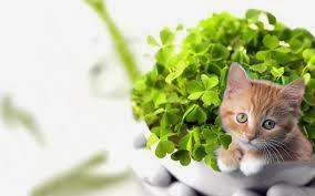 قطط , صور قطط , قطط كيوووت , صور قطط ممتعه , صور قطط مضحكه 13868348001.jpg