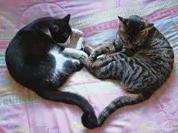 قطط , صور قطط , قطط كيوووت , صور قطط ممتعه , صور قطط مضحكه 13868348002.jpg