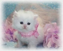قطط , صور قطط , قطط كيوووت , صور قطط ممتعه , صور قطط مضحكه 13868348003.jpg