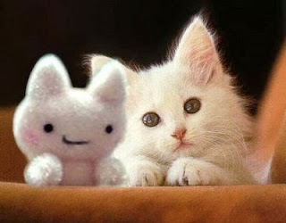 قطط , صور قطط , قطط كيوووت , صور قطط ممتعه , صور قطط مضحكه 13868348004.jpg