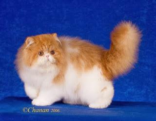 قطط , صور قطط , قطط كيوووت , صور قطط ممتعه , صور قطط مضحكه 13868348005.jpg