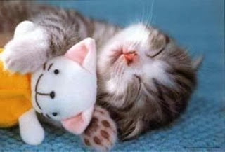 قطط , صور قطط , قطط كيوووت , صور قطط ممتعه , صور قطط مضحكه 13868348006.jpg