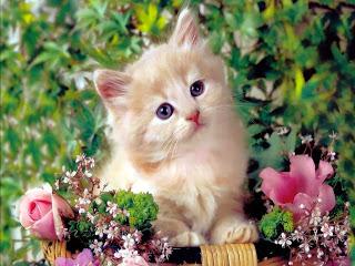 قطط , صور قطط , قطط كيوووت , صور قطط ممتعه , صور قطط مضحكه 13868348007.jpg