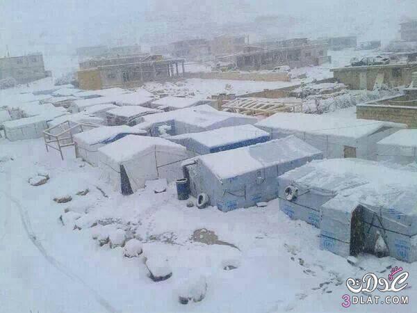 الشتاء تصوير جوزى هههههههههههه