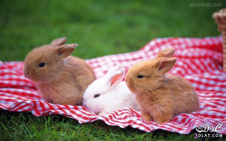 صور أرانب , صور أرانب كيوت, صور أرانب جميلة 13875732741.jpg