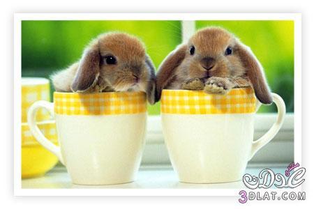 صور أرانب , صور أرانب كيوت, صور أرانب جميلة 13875732756.jpg