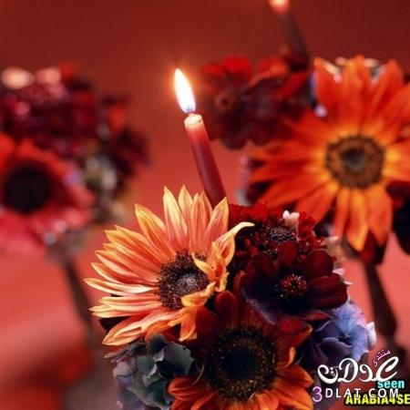 صور من الطبيعه صور ورد صور ورود جميله صور طبيعيه منوعه 13876592304.jpg