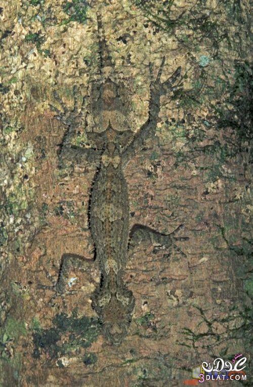 تموية الحيوانات والحشرات الطبيعة 138792801310.jpg