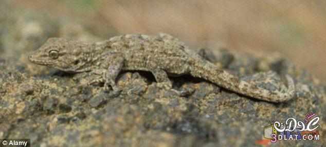 تموية الحيوانات والحشرات الطبيعة 13879280134.jpg