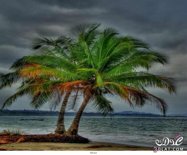 صور من الطبيعة 13879949491.jpg