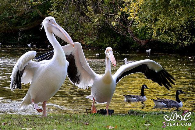 طيور خلفيات طيور لجهازك, حيوانات