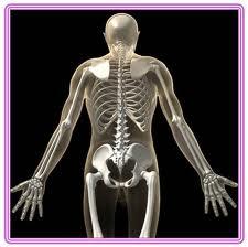 تعرفى علي الاعشاب المفيده لعلاج هشاشه العظام 13884429471.jpeg