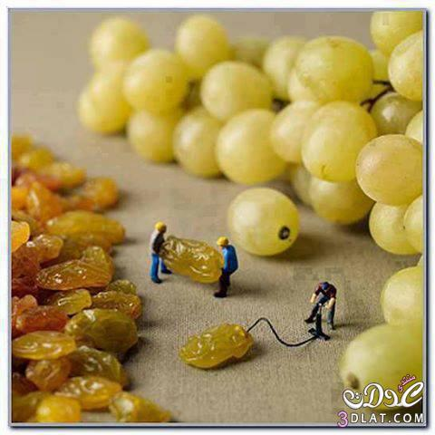 العنب العنب العنب .......